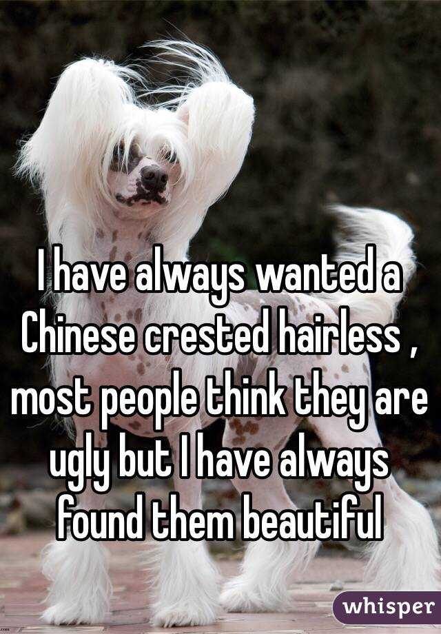 I have always wanted a Chinese crested hairless , most people think they are ugly but I have always found them beautiful
