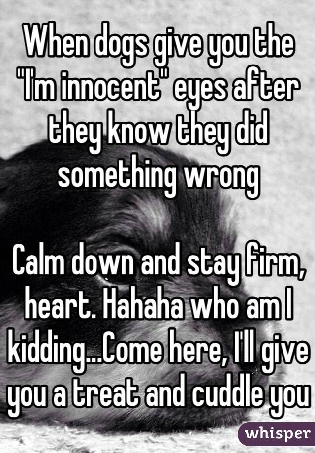 "When dogs give you the ""I'm innocent"" eyes after they know they did something wrong  Calm down and stay firm, heart. Hahaha who am I kidding...Come here, I'll give you a treat and cuddle you"