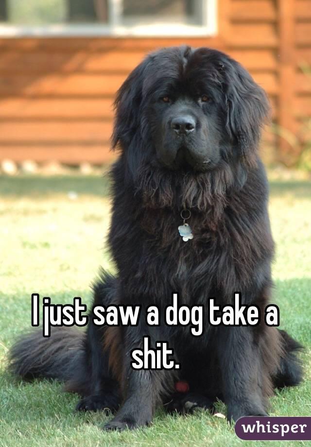 I just saw a dog take a shit.