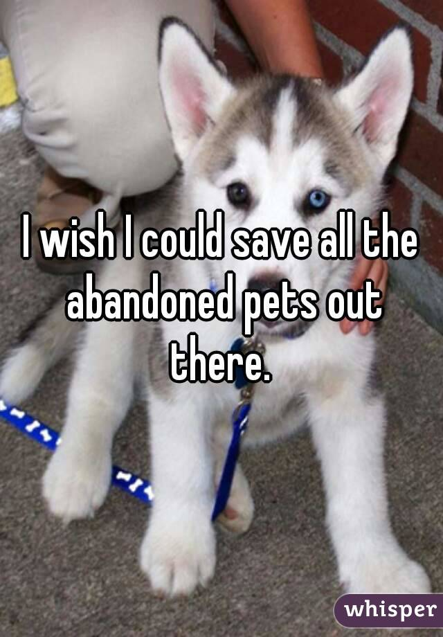 I wish I could save all the abandoned pets out there.