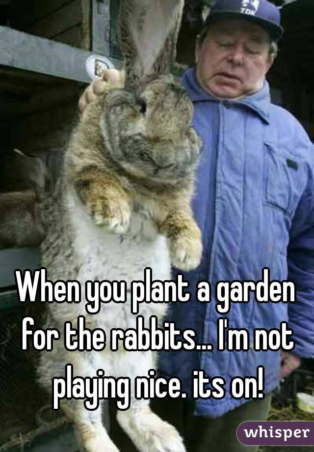 When you plant a garden for the rabbits... I'm not playing nice. its on!
