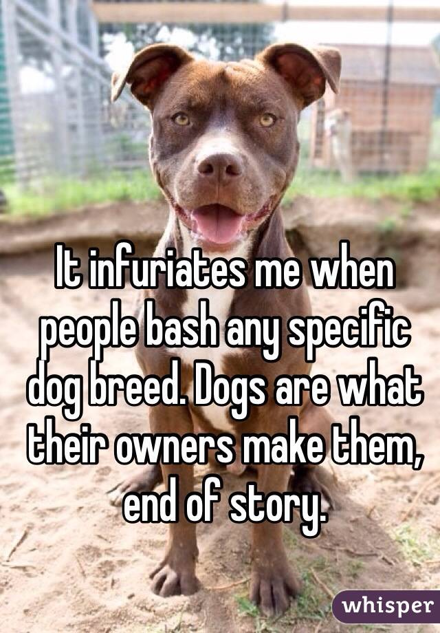 It infuriates me when people bash any specific dog breed. Dogs are what their owners make them, end of story.