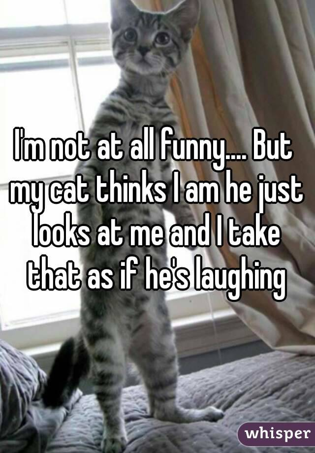 I'm not at all funny.... But my cat thinks I am he just looks at me and I take that as if he's laughing
