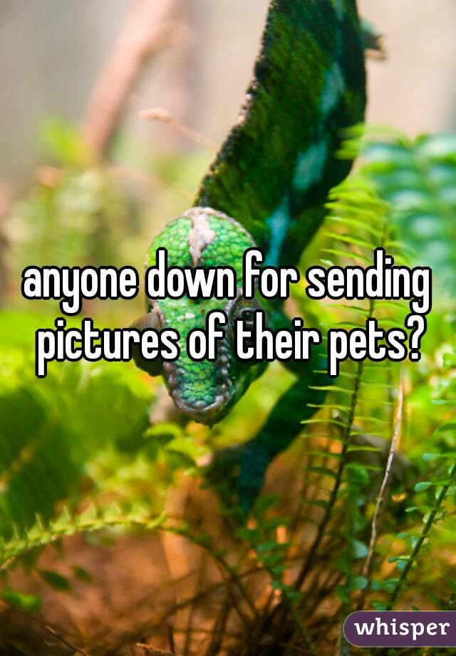 anyone down for sending pictures of their pets?