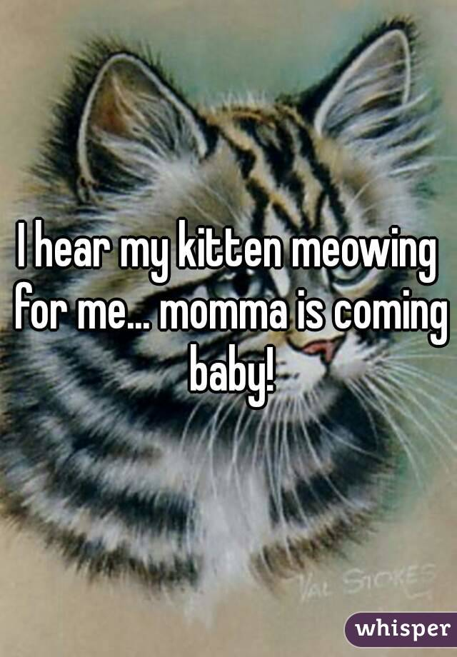 I hear my kitten meowing for me... momma is coming baby!