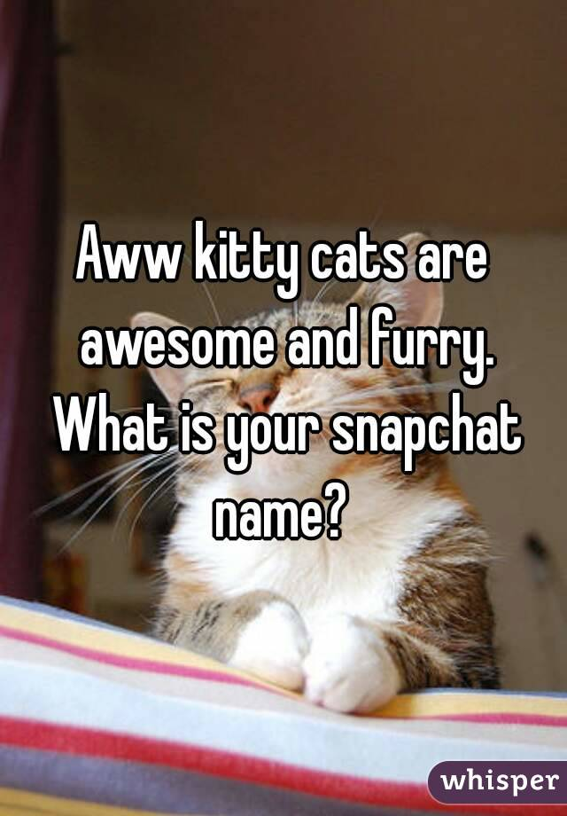 Aww kitty cats are awesome and furry. What is your snapchat name?