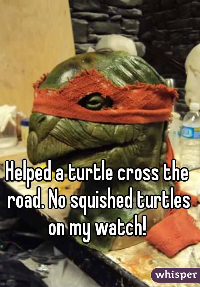 Helped a turtle cross the road. No squished turtles on my watch!
