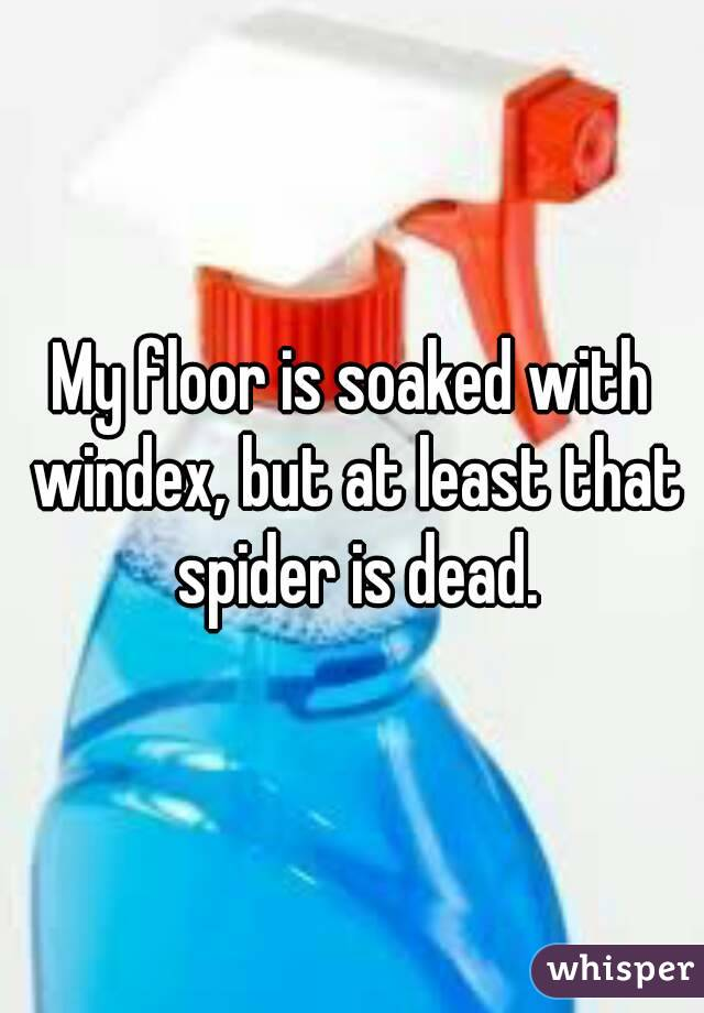 My floor is soaked with windex, but at least that spider is dead.