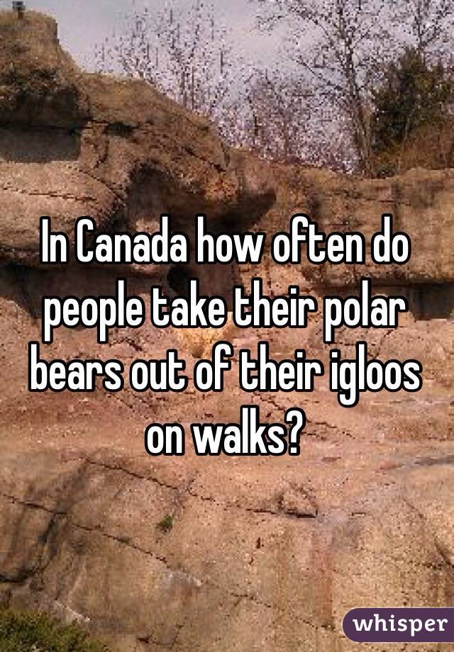 In Canada how often do people take their polar bears out of their igloos on walks?