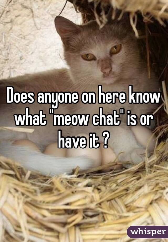 "Does anyone on here know what ""meow chat"" is or have it ?"
