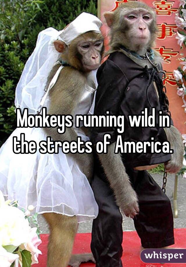 Monkeys running wild in the streets of America.