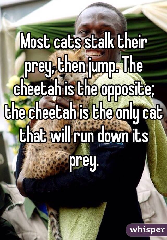 Most cats stalk their prey, then jump. The cheetah is the opposite; the cheetah is the only cat that will run down its prey.