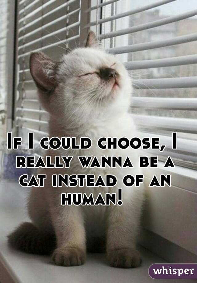 If I could choose, I really wanna be a cat instead of an human!