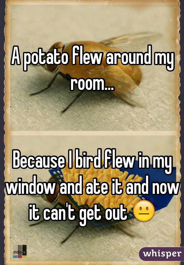 A potato flew around my room...   Because I bird flew in my window and ate it and now it can't get out 😐