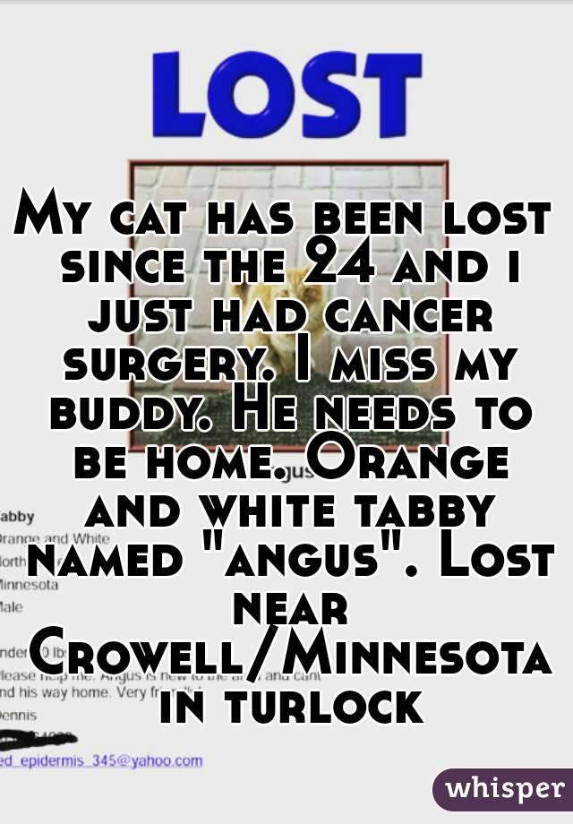 """My cat has been lost since the 24 and i just had cancer surgery. I miss my buddy. He needs to be home. Orange and white tabby named """"angus"""". Lost near Crowell/Minnesota in turlock"""