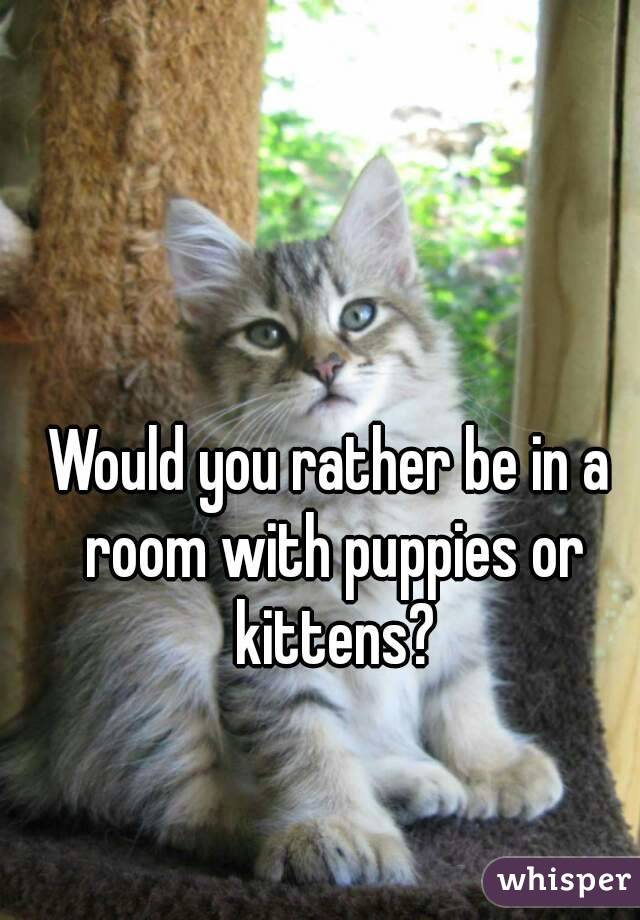Would you rather be in a room with puppies or kittens?