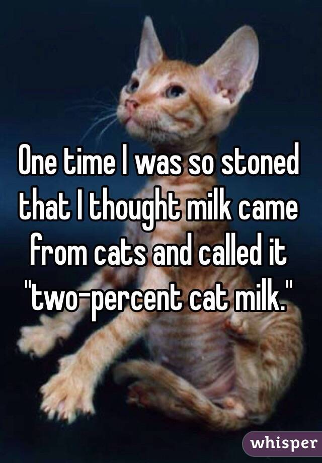 """One time I was so stoned that I thought milk came from cats and called it """"two-percent cat milk."""""""