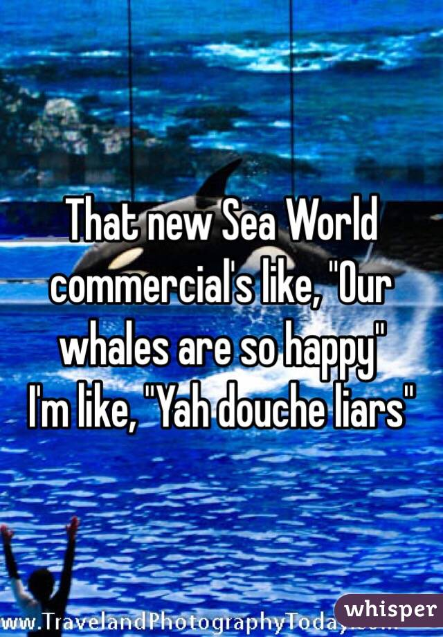 "That new Sea World commercial's like, ""Our whales are so happy""  I'm like, ""Yah douche liars"""