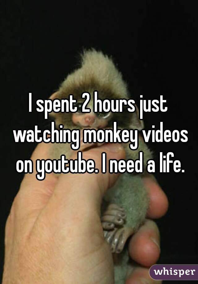 I spent 2 hours just watching monkey videos on youtube. I need a life.