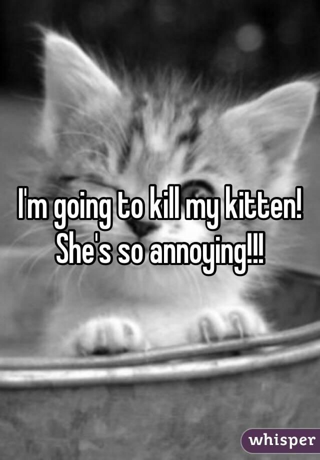 I'm going to kill my kitten! She's so annoying!!!