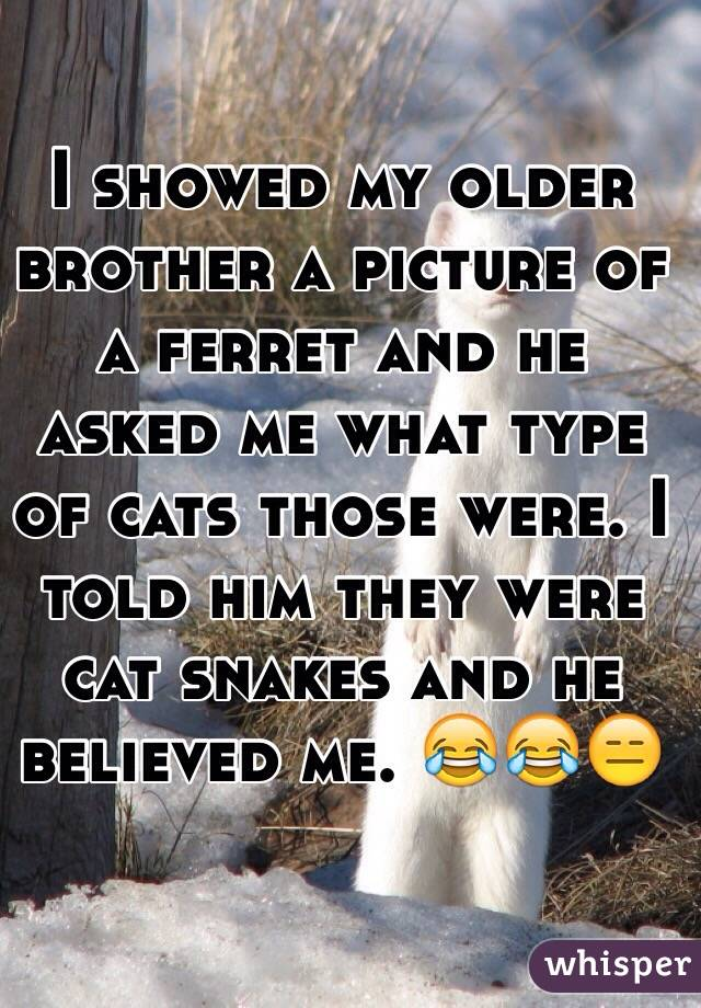 I showed my older brother a picture of a ferret and he asked me what type of cats those were. I told him they were cat snakes and he believed me. 😂😂😑