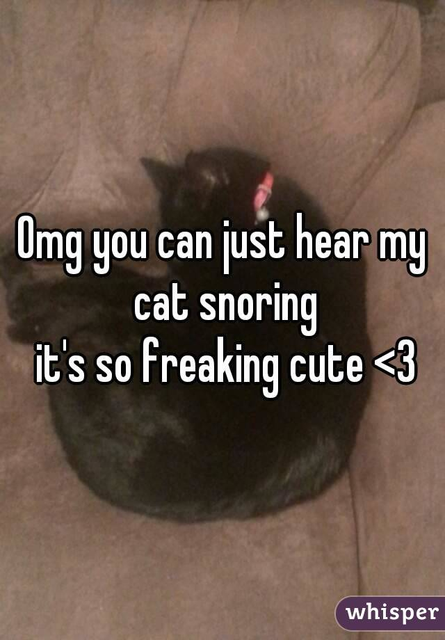Omg you can just hear my cat snoring  it's so freaking cute <3
