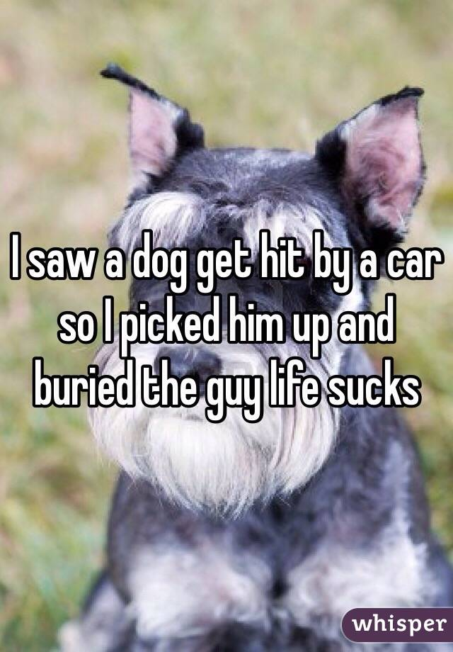 I saw a dog get hit by a car so I picked him up and buried the guy life sucks