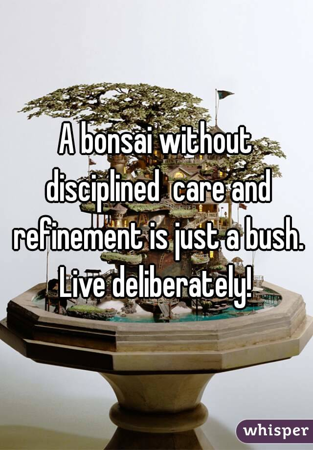 A bonsai without disciplined  care and refinement is just a bush. Live deliberately!