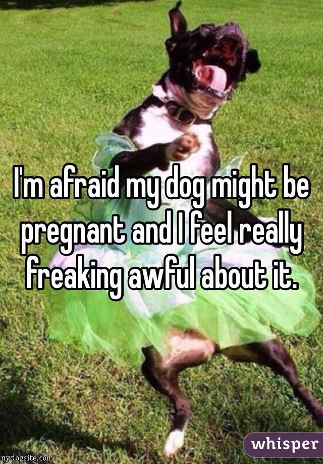 I'm afraid my dog might be pregnant and I feel really freaking awful about it.