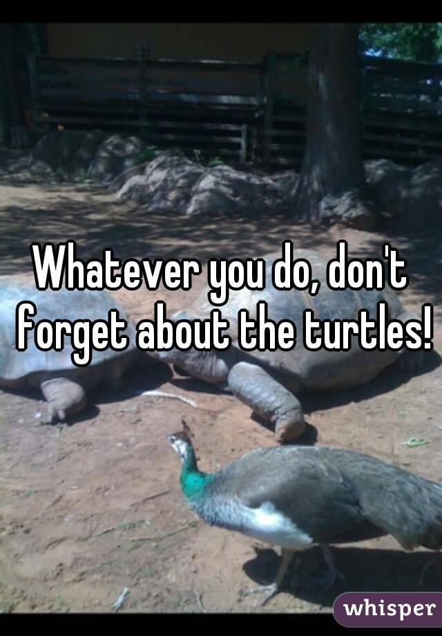 Whatever you do, don't forget about the turtles!