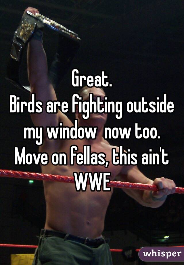Great.  Birds are fighting outside my window  now too.  Move on fellas, this ain't WWE