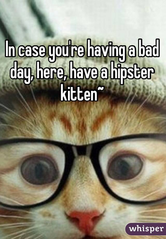 In case you're having a bad day, here, have a hipster kitten~