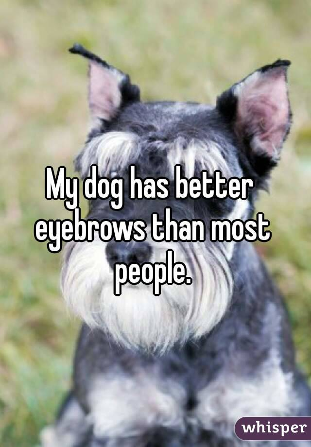 My dog has better eyebrows than most people.