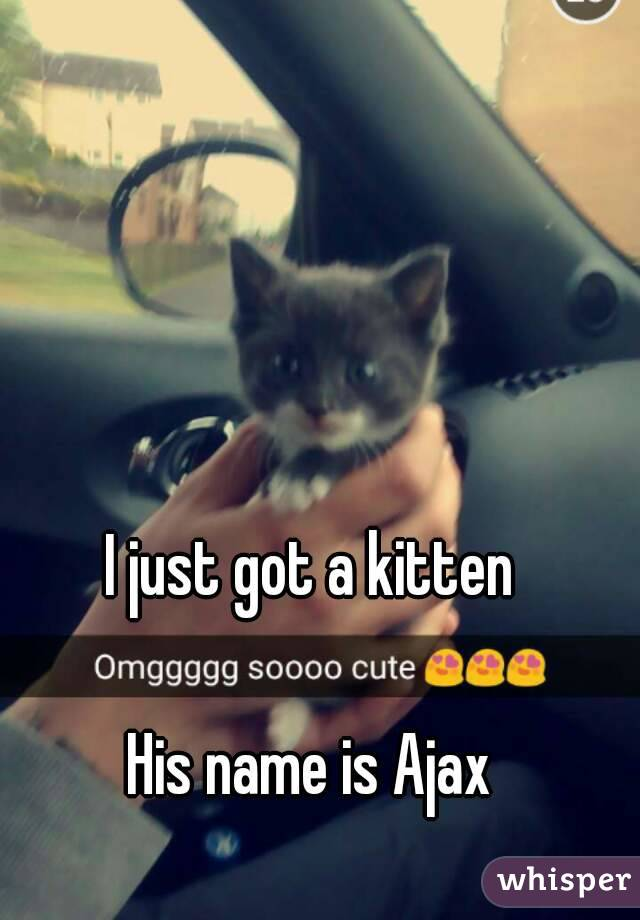 I just got a kitten  His name is Ajax