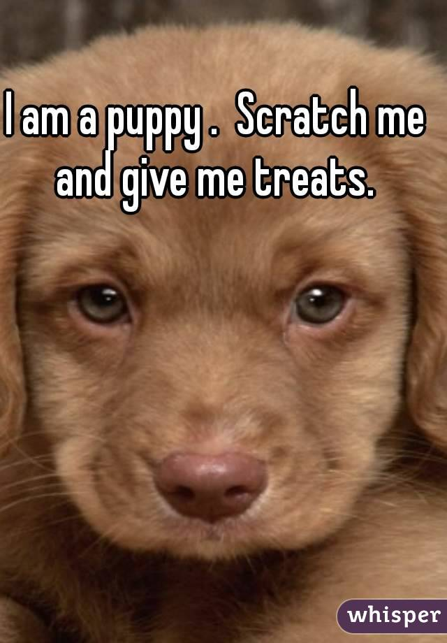 I am a puppy .  Scratch me and give me treats.
