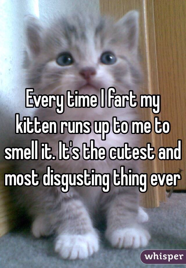 Every time I fart my kitten runs up to me to smell it. It's the cutest and most disgusting thing ever