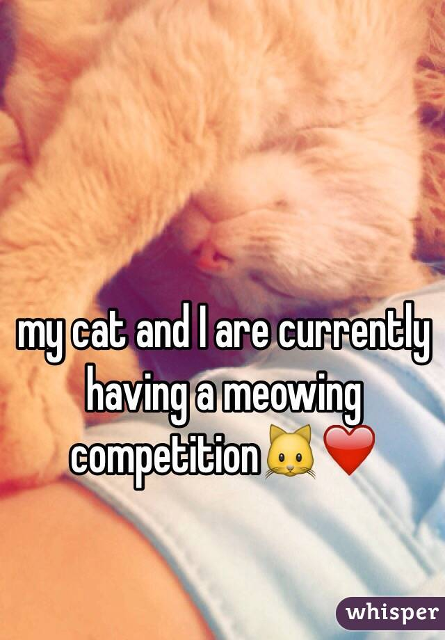 my cat and I are currently having a meowing competition🐱❤️