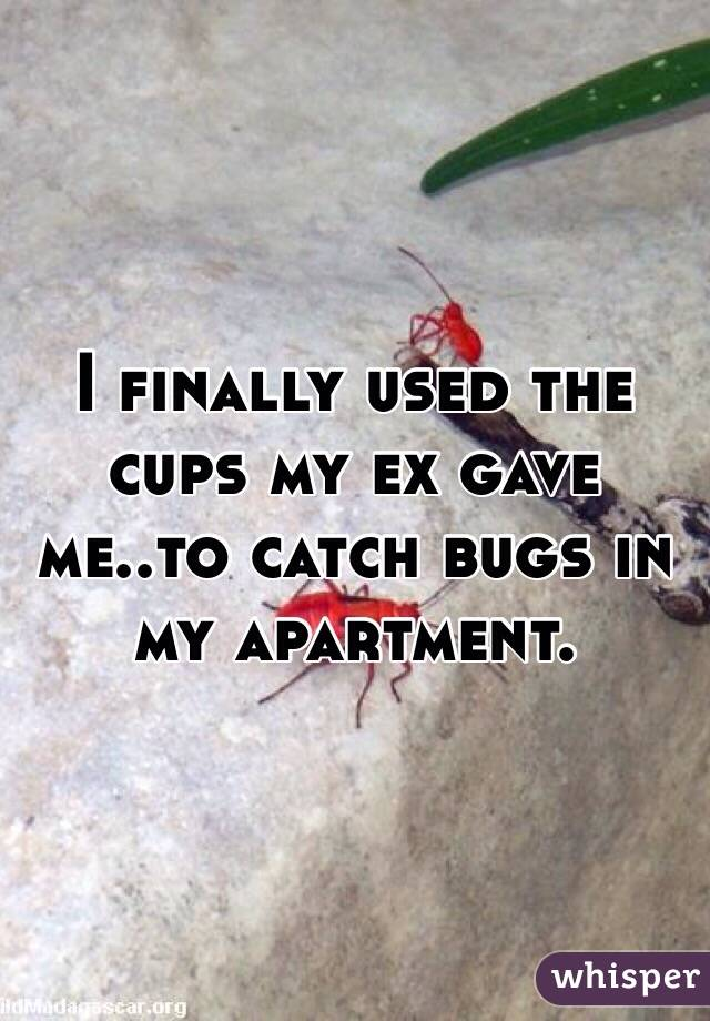 I finally used the cups my ex gave me..to catch bugs in my apartment.