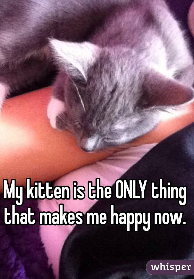 My kitten is the ONLY thing that makes me happy now.