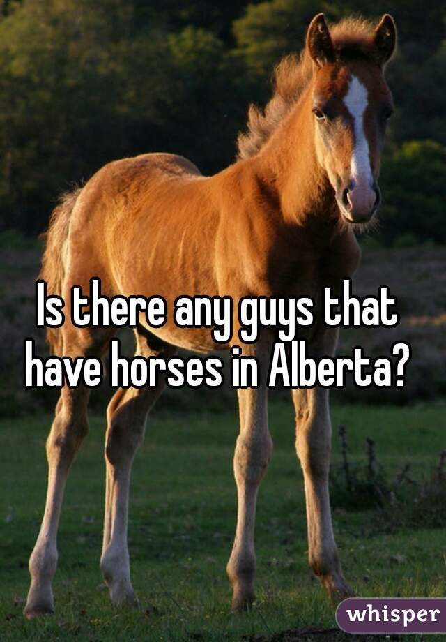 Is there any guys that have horses in Alberta?