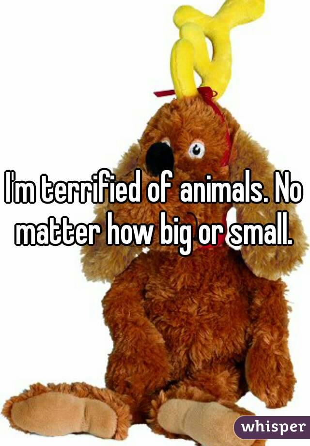 I'm terrified of animals. No matter how big or small.