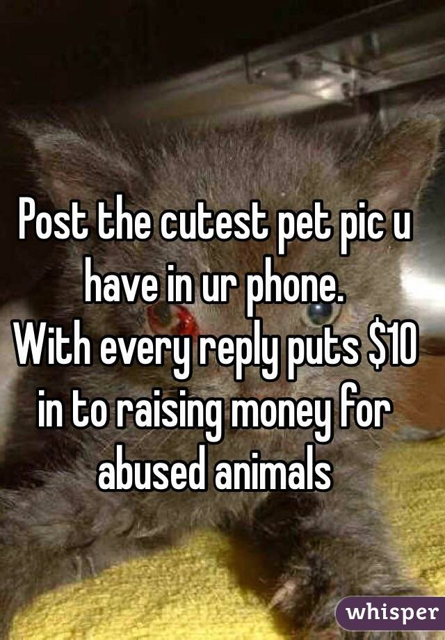 Post the cutest pet pic u have in ur phone.  With every reply puts $10 in to raising money for abused animals