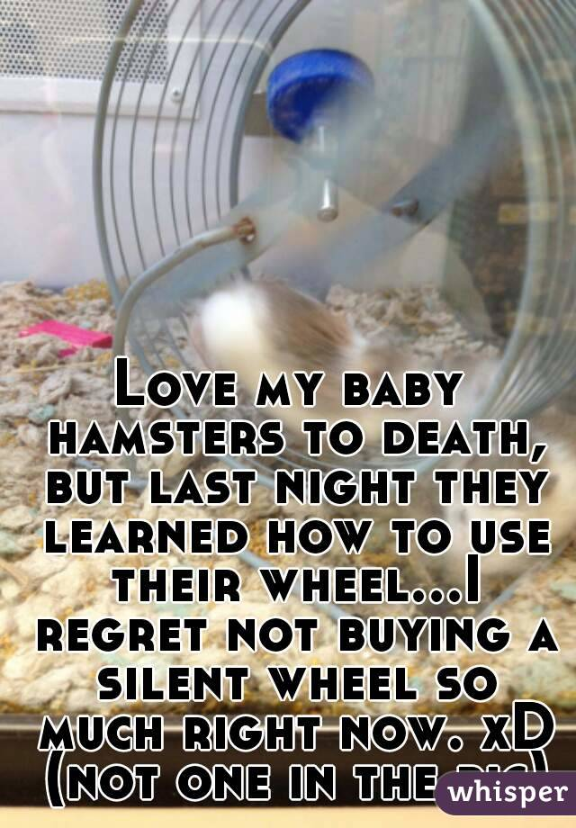 Love my baby hamsters to death, but last night they learned how to use their wheel...I regret not buying a silent wheel so much right now. xD (not one in the pic)