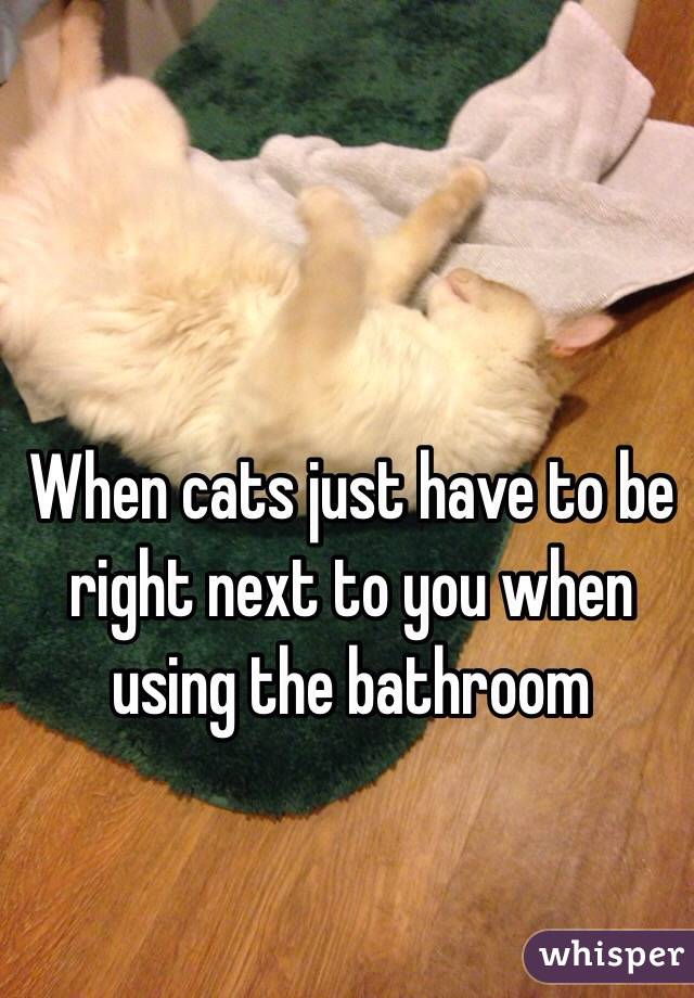 When cats just have to be right next to you when using the bathroom