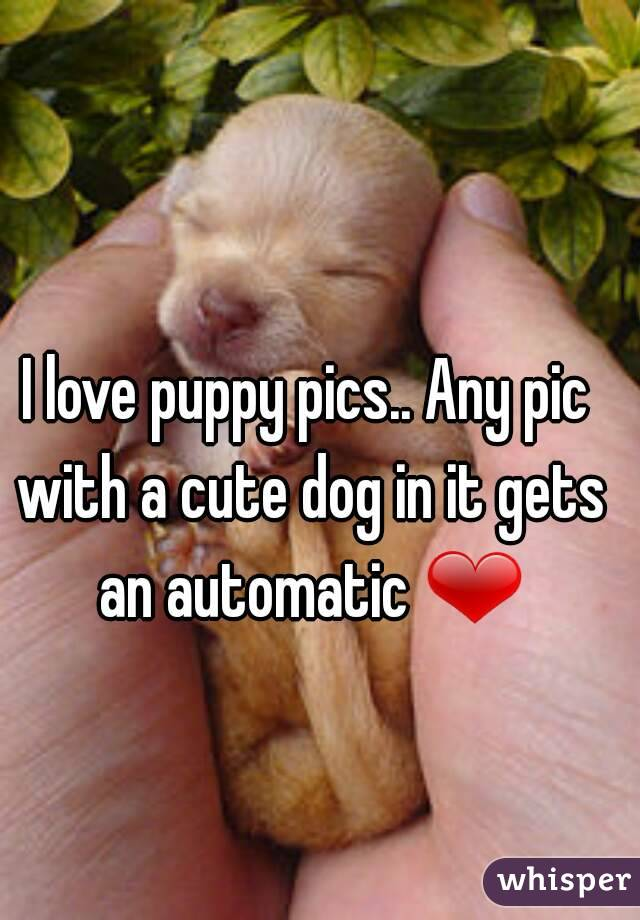 I love puppy pics.. Any pic with a cute dog in it gets an automatic ❤