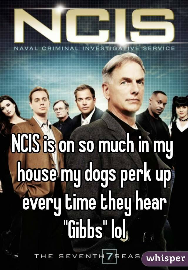 """NCIS is on so much in my house my dogs perk up every time they hear """"Gibbs"""" lol"""