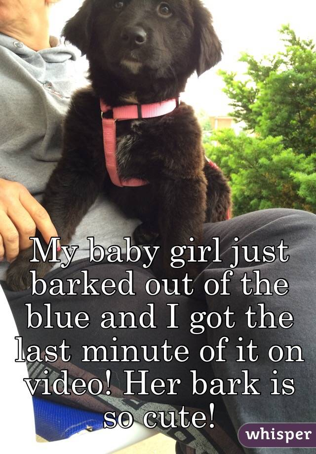 My baby girl just barked out of the blue and I got the last minute of it on video! Her bark is so cute!
