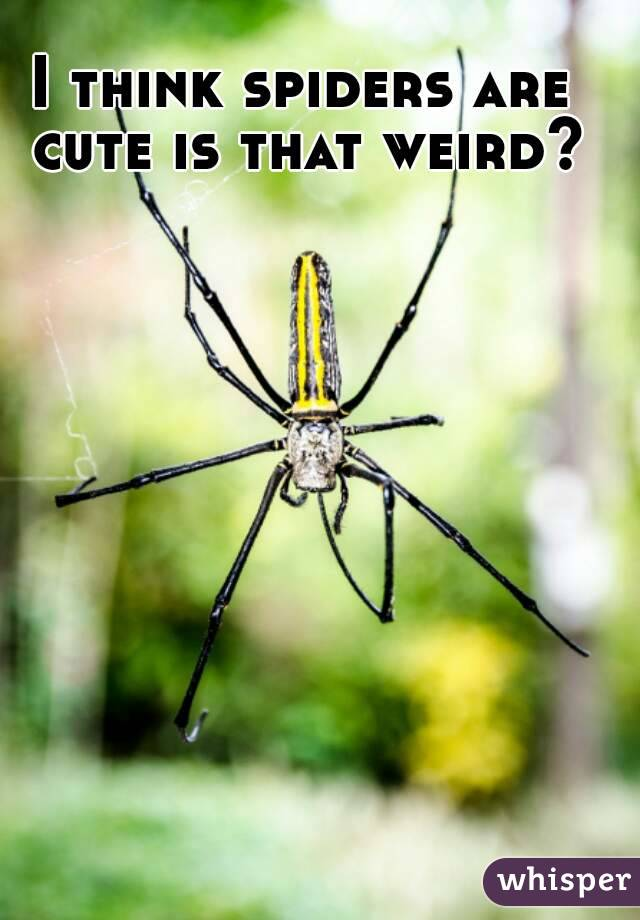 I think spiders are cute is that weird?