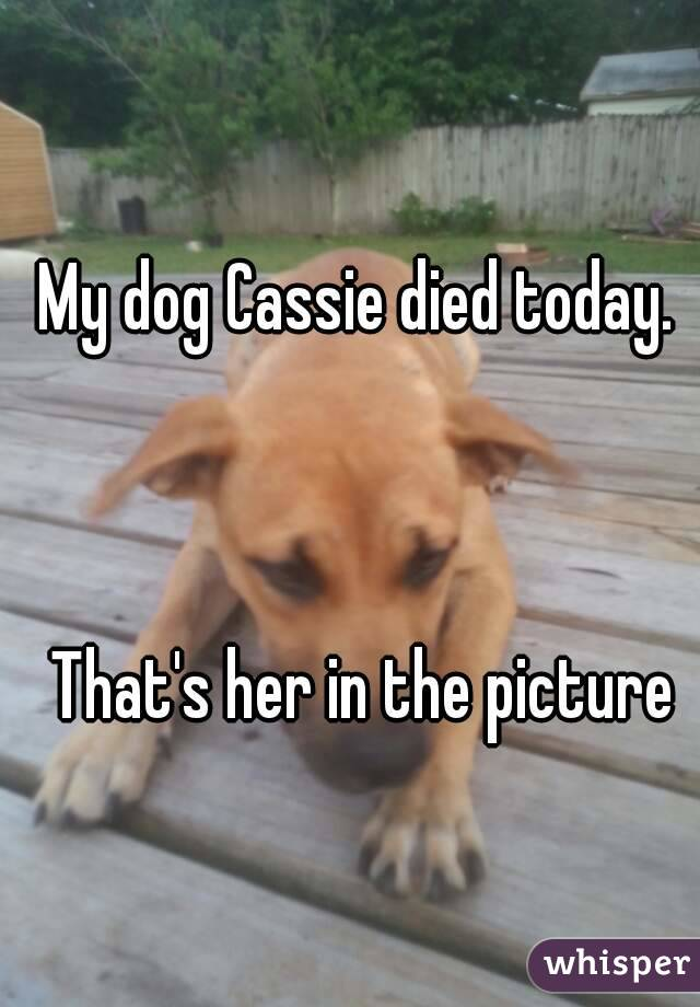 My dog Cassie died today.     That's her in the picture