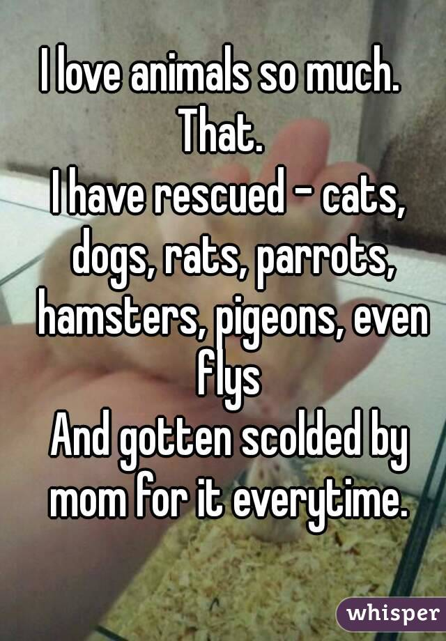 I love animals so much.   That.   I have rescued - cats, dogs, rats, parrots, hamsters, pigeons, even flys  And gotten scolded by mom for it everytime.